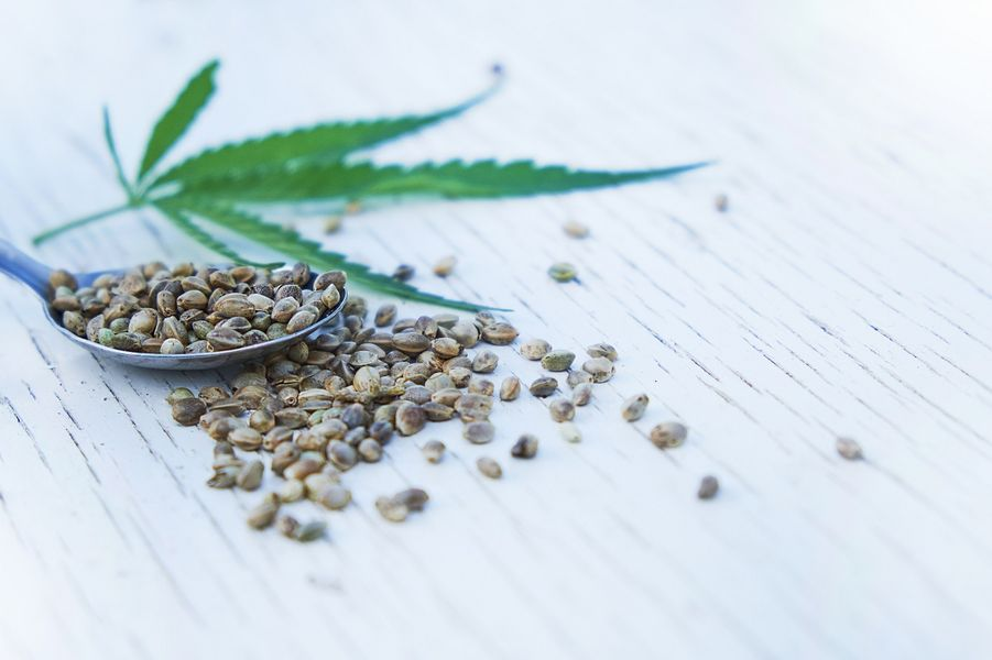 Nasiona marihuany. Indica i sativa - czym się różnią?