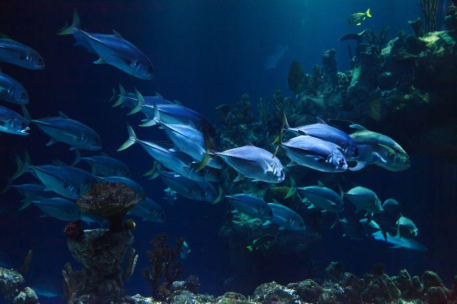filtr do akwarium